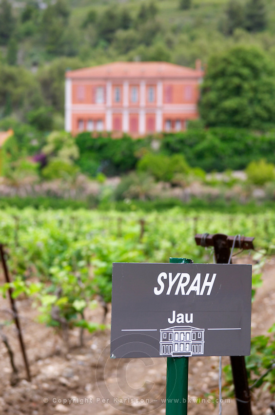 Vineyard. Syrah. Chateau de Jau, Cases de Pene, Roussillon, France