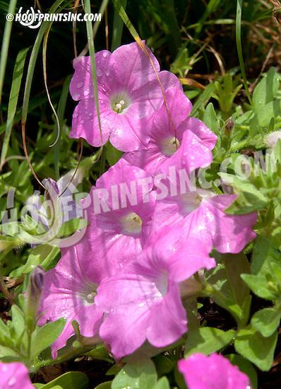 flowers at Delaware Park on 7/8/13