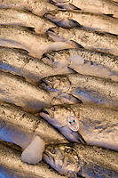 Salmon at Pike Place Market in Seattle Washington.