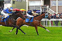 Winner of The Shadwell Racing Excellence Apprentice Handicap Handytalk (3) ridden by Oliver Searle and trained by Rod Millman  during Evening Racing at Salisbury Racecourse on 11th June 2019