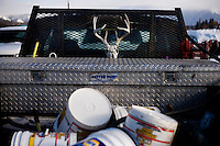 A deer skull and antlers rack hangs on the back of a pickup parked at the Whitefish Skijoring World Championship event in Whitefish, Montana, USA.  Skijoring is a competitive sport in which a person on skis navigates an obstacle course while being pulled behind a galloping horse.
