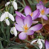 Gisela, FLOWERS, BLUMEN, FLORES, photos+++++,DTGK2063,#f#