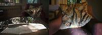 photo inspired by the emotions and words of A, a woman abused  when she was a child first and then victim of violence by the husband. Above the translation of her handwriting:&quot;left as a broken woman, ripped, cut, a segment of a split identity,  fragment of a blurred image, a lost object, left as a woman, who's a never realised project, a line of an out of tune music, a reed in the wind.<br /> Immagine ispirata dalle parole di A., una donna che ha subito abusi in famiglia durante l'infanzia e poi vittima di violenza domestica: &quot;&hellip; ti lascia&hellip; lascia una donna rotta, scucita, tagliata, spicchio di un&rsquo;identit&agrave; scomposta, frammento di un &lsquo;immagine sfocata, un oggetto smarrito.Lascia una donna, schizzo di un progetto realizzato, accenno di un motivo stonato, una canna sbattuta dal vento.&quot;