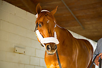 HALLANDALE BEACH, FL-JANUARY 28: Gun Runner at the barn before departure at Gulfstream Park Race Track on January 28, 2018 in Hallandale Beach, Florida. (Photo by Kaz Ishida/Eclipse Sportswire/Getty Images)