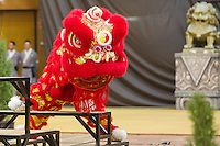 Lion dancers perform during the opening ceremony of the 3rd International Chan Wu, Traditional Kung Fu and Wu Shu Championships in Budapest, Hungary on November 24, 2012. ATTILA VOLGYI