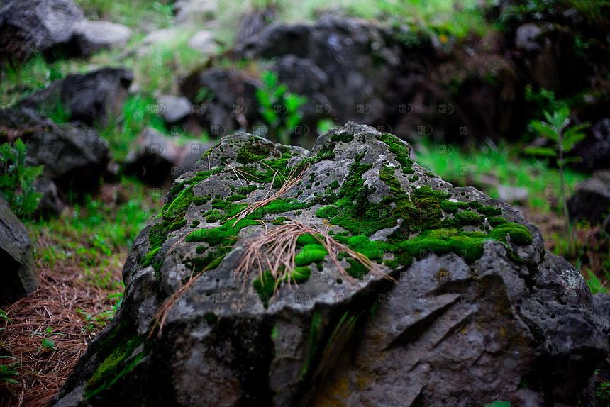 CIUDAD DE M&Eacute;XICO, DF. Julio 17, 2013 &ndash; Biodiversidad de &aacute;rboles y hongos en el bosque del Ajusco en la Ciudad de M&eacute;xico.  FOTO: ALEJANDRO MEL&Eacute;NDEZ<br /> <br /> MEXICO CITY, DF. July 17, 2013 - Biodiversity of trees and fungi in the forest from the Ajusco in Mexico City. PHOTO: ALEJANDRO MELENDEZ