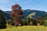 Alpine farm fields in autumn at the Oberjoch Pass on the German - Austrian Border