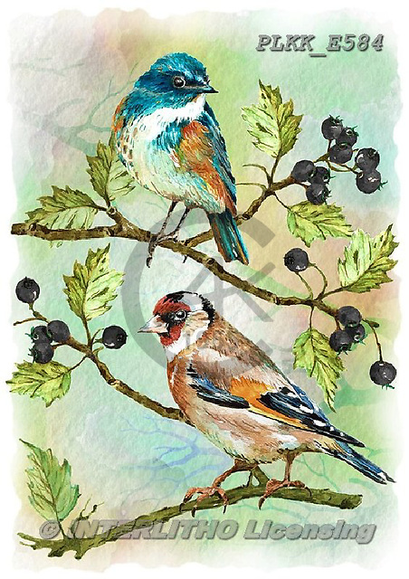 Kris, REALISTIC ANIMALS, REALISTISCHE TIERE, ANIMALES REALISTICOS, paintings+++++,PLKKE584,#a#, EVERYDAY ,birds