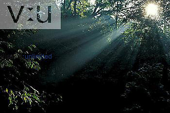 Crepuscular rays shining through trees in fog Kentucky
