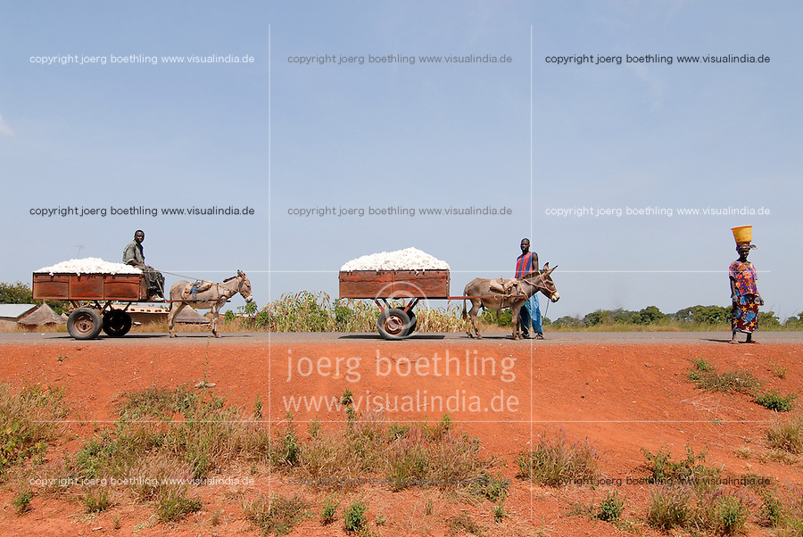 MALI , Bougouni, Bauern transportieren Baumwolle mit Eselskarren | .MALI , Bougouni , farmer transport cotton from field with donkey cart