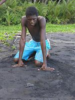 local researcher watches leatherback sea turtle hatchling, Dermochelys coriacea, run to sea, Dominica, West Indies, Caribbean, Atlantic