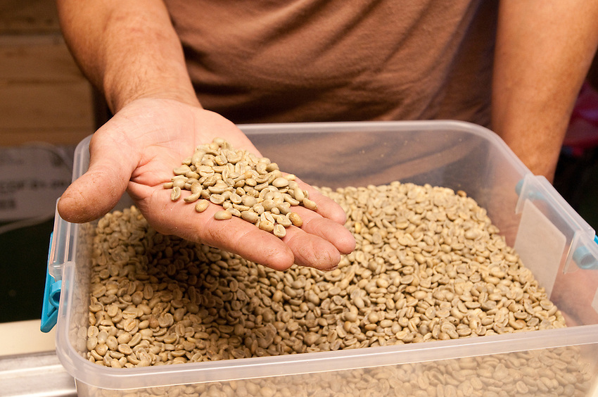 Dancing Crane Coffee House owner Jim LeBlanc shows raw coffee beans while roasting coffee in his homemade roastery in Brimley Michigan.