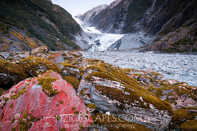 Surviving algae and flora on rocks in glacial valley in front of Franz Josef Glacier, Westland National Park, West Coast, World Heritage Area, South Westland, New Zealand