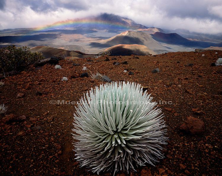 """""""Silversword, Haleakala Crater, Maui Haleakala National Park"""