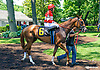 Summer Forever with Carolin Stummer aboard in the paddock before the Longines International Ladies Fegentri Amateur race at Delaware Park on 6/8/15