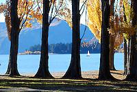 Looking through poplar trees onto Lake Wanaka on a sunny day, Southern Lakes, New Zealand