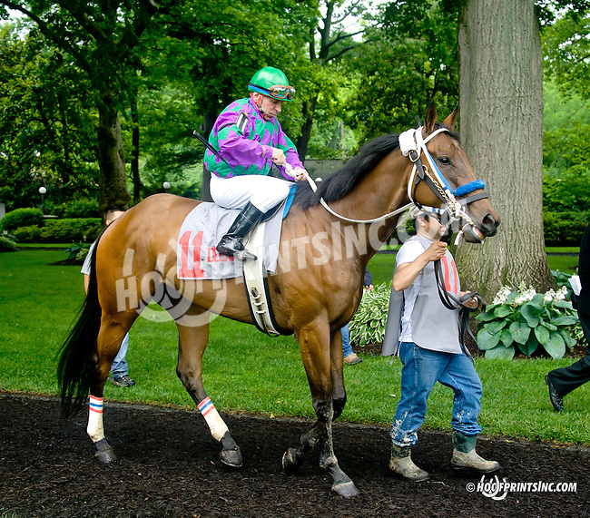 Ms. Cruisen'  before The Dashing Beauty Stakes at Delaware Park racetrack on 6/12/14