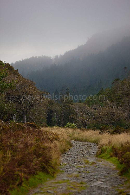 The Kerry Way hiking trail, near Torc Mountain, Kerry. The Kerry Way is a 214km long circular trail of the Iveragh Peninsula, that takes some nine days to walk.