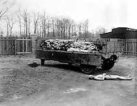A truck load of bodies of prisoners of the Nazis, in the Buchenwald concentration camp at Weimar, Germany.  The bodies were about to be disposed of by burning when the camp was captured by troops of the 3rd U.S. Army.  April 14, 1945.  Pfc. W. Chichersky.  (Army)<br /> NARA FILE #:  111-SC-203464<br /> WAR &amp; CONFLICT BOOK #:  1120