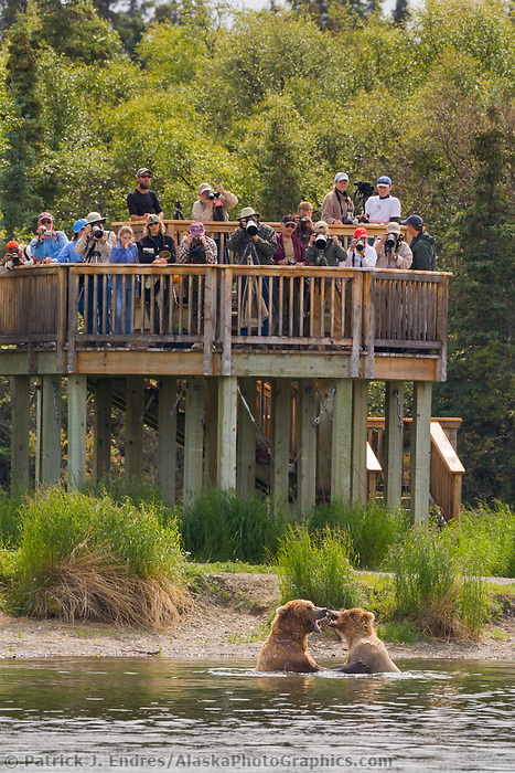 Tourists view bears from the viewing platform along the Brooks River, Brooks Lodge, Katmai National Park, Alaska
