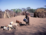 Turkana woman watering her family's herd , Turkana Northern Kenya, Africa
