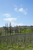 The hillsides surrounding Foligno are covered in grape vines