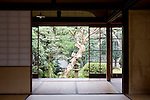 Photo shows the tree so loved by Lafcadio Hearn inside his old residence in Matsue, Shimane Prefecture, Japan on 05 Nov. 2012. Photographer: Robert Gilhooly.