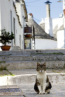 Un gatto davanti ai  trulli di Alberobello.<br /> A cat sits past some Trulli, typical beehive-shaped houses of Alberobello.<br /> UPDATE IMAGES PRESS/Riccardo De Luca