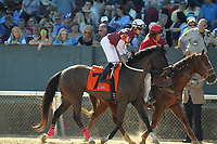 HOT SPRINGS, AR - MARCH 18: Streamline #7, ridden by Chris Landeros before the running of the Azeri Stakes race at Oaklawn Park on March 18, 2017 in Hot Springs, Arkansas. (Photo by Justin Manning/Eclipse Sportswire/Getty Images)