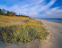 Point Beach State Park, Point Beach State Forest, WI<br /> Beach grasses cover the dunes on the shoreline of Lake Michigan