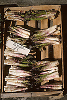 Europe/France/Aquitaine/24/Dordogne/Périgord/Périgord Blanc/Périgueux: Bottes d'aperges sur le marché