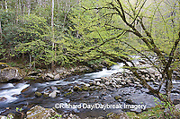 66745-038.07 Middle Prong of the Little River in spring, Tremont Area, Great Smoky Mountain National Park, TN