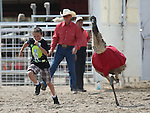Jackson Colburn, 12, of Fallon, competes in an emu race at the 56th annual International Camel &amp; Ostrich Races in Virginia City, Nev. on Friday, Sept. 11, 2015. <br /> Photo by Cathleen Allison