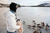 Woman feeds ducks on frozen Llangorse lake; Brecon Beacons naitonal park; Wales