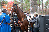 2nd Maiden (3YO) - Schoodic