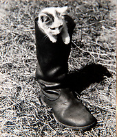 BNPS.co.uk (01202 558833)<br /> Pic: Dickins/BNPS<br /> <br /> Operation Barbarossa - Nazi humour? A kitten in a Jackboot also features.<br /> <br /> The unseen personal photo album of Field Marshal Wolfram von Richthofen, cousin to the legendary Red Baron, which gives an unprecedented insight into his military career in the Third Reich, has been rediscovered.<br /> <br /> Wolfram served in the Red Baron's squadron in the WW1, went on to design the 'Jericho trumpet' of the infamous Stuka Bomber between the wars, before leading the Condor Legion in the Spanish Civil War.<br /> <br /> After the outbreak of WW2 the fascinating album shows Richthofen's lead roll in Operation Barbarossa - the Nazi's suprise invasion of Communist Russia and their race to conquer the vast country before the onset of the notorious Russian winter.<br /> <br /> The two albums were taken from Berlin by a British soldier at the end of the Second World War who kept it for 60 years before it was passed into the hands of a private collector.<br /> <br /> Dickins auctions are selling the historic albums with a &pound;20,000 estimate on 31st March.