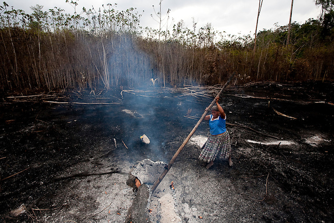 A Mayan woman from the Guatemlam highlands tries to put out a fire in her Maize field that started a fire in the nearby forest. Highlands mayans have flooded the reserve trying to find land for maize and beans, many have also worked for large land holders to clear huge swaths of the reserve.