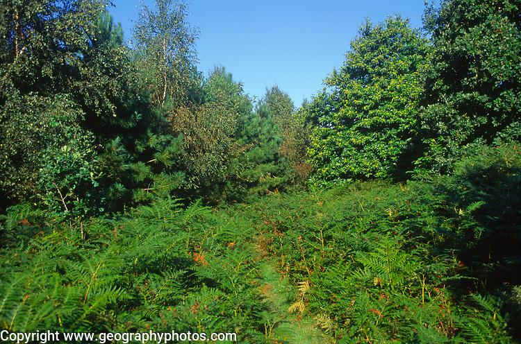 A07WW7 Suffolk Sandlings heathland England