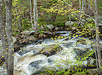 Card Mill Stream in Hancock County, ME, USA