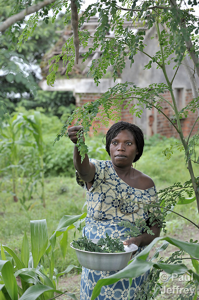 Masanga Msogo Mwambuy picks moringa leaves. The woman lives on a Congolese military base near Kamina, and has received education and training about moringa from the United Methodist Committee on Relief.