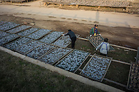 Workers dry fish under the sun in Poyang county at Poyang Lake, Jiangxi Province, December 2014. Poyang Lake, located in the north of Jiangxi Province, is the largest freshwater lake in China. It fluctuates dramatically between wet and dry seasons, from 3,500 square kilometres down to about 200 square kilometres. The lake provides a habitat for half a million migratory birds.