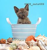 Xavier, ANIMALS, cats, photos, SPCHCATS699,#A# Katzen, gatos