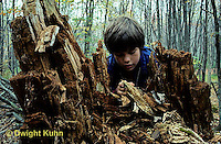 DT09-013c  Forest - boy exploring decaying tree, looking for termites
