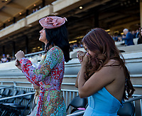 DEL MAR, CA - NOVEMBER 04: Fans cheer as they watch their horse win on Day 2 of the 2017 Breeders' Cup World Championships at Del Mar Racing Club on November 4, 2017 in Del Mar, California. (Photo by Kyle Grantham/Eclipse Sportswire/Breeders Cup)