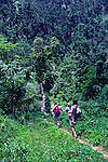 People trekking in the Blue Mountains, Jamaica