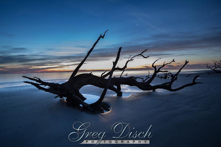 Driftwood Beach on Jekyll Island Georgia, is a tree graveyard creating amazing ocean views at sunrise.