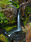 California, Yosemite National Park. A small waterfall with ferns in Yosemite National Park.