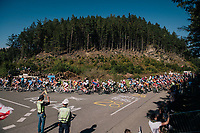 peloton cheered on<br /> <br /> MEN ELITE ROAD RACE<br /> Kufstein to Innsbruck: 258.5 km<br /> <br /> UCI 2018 Road World Championships<br /> Innsbruck - Tirol / Austria