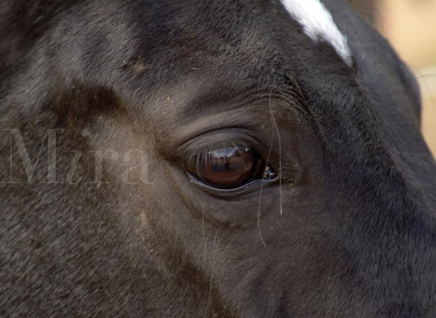 Horses eye.