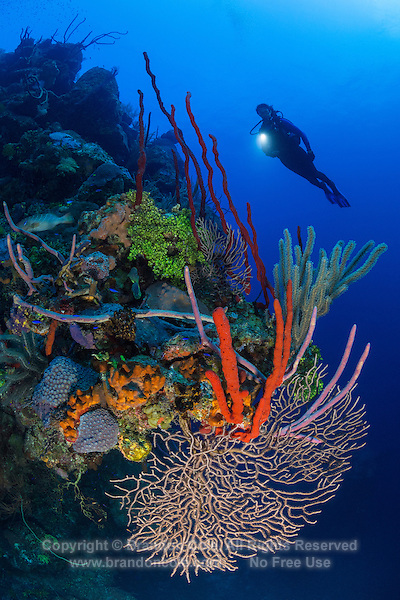 TR0030-D. A woman scuba diving (model released) near a variety of sponge species, as well corals, sea fans, sea rod gorgonians, and algaes decorating an outcropping 80 feet deep along a sheer wall plunging downward from the reef. Cayman Islands, Caribbean Sea.<br /> Photo Copyright &copy; Brandon Cole. All rights reserved worldwide.  www.brandoncole.com
